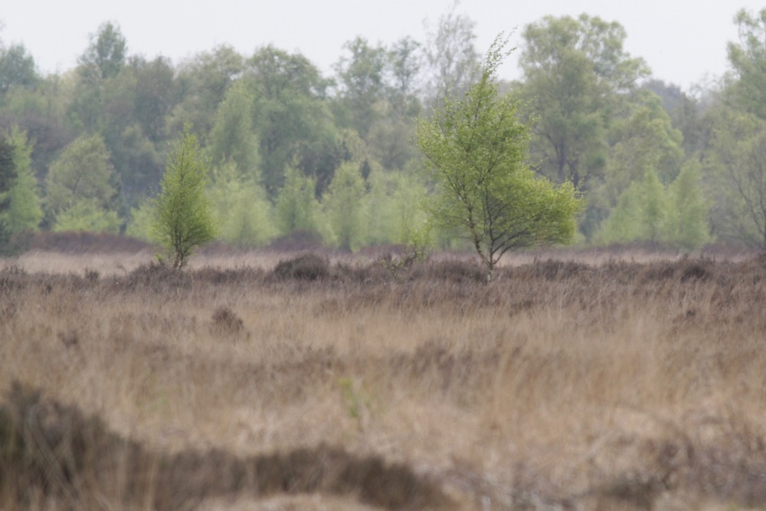 Zwillbrocker Venn, 4 May 2017